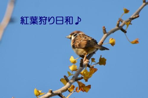 001_20151103221227c49.jpg