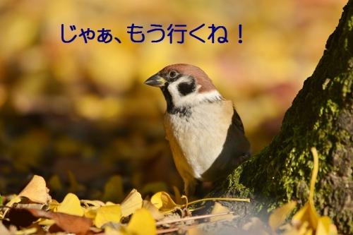 010_20151201221739efc.jpg