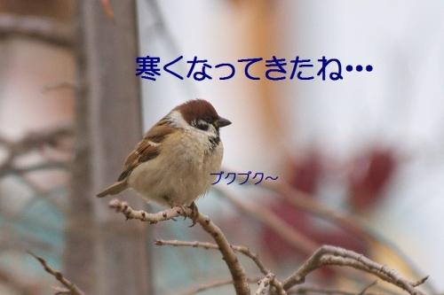 010_20151202215738242.jpg