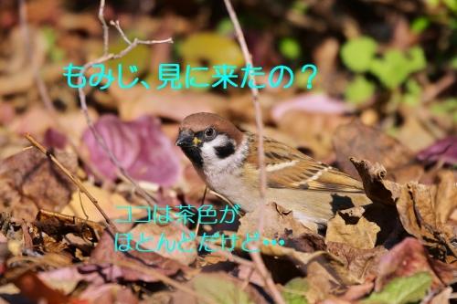 010_20151203222946cc1.jpg