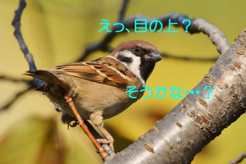 010_2015120722140765c.jpg