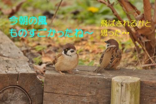 010_20151211180246717.jpg