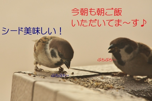 010_20160104185036c63.jpg