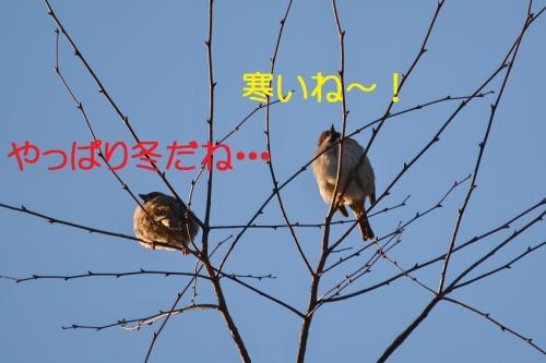 010_201601152050174da.jpg