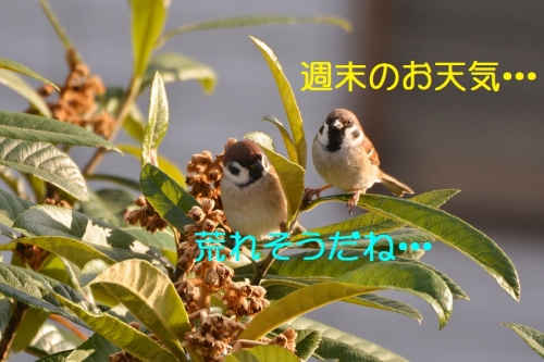 010_201601221841011f0.jpg