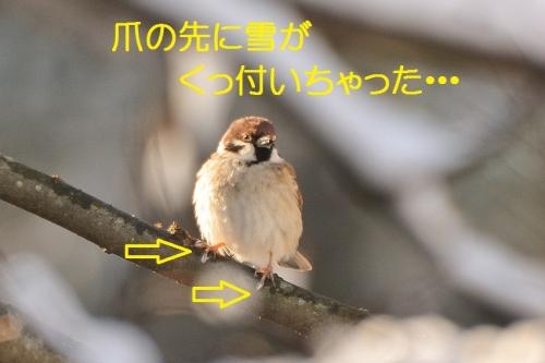 010_201601302204122cb.jpg