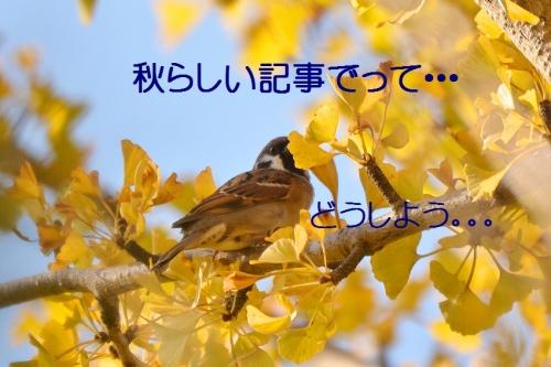 020_2015112220171824a.jpg