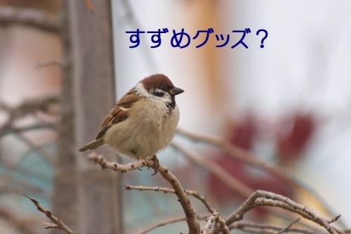 020_20151202215739eac.jpg