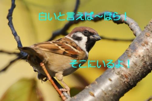 020_20151207221408112.jpg