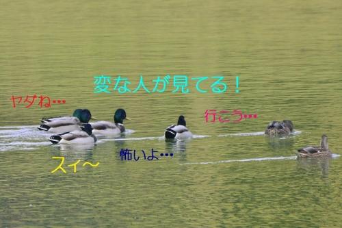 020_20151214212954c0d.jpg