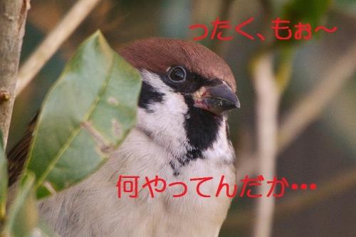 020_201512152207174ee.jpg