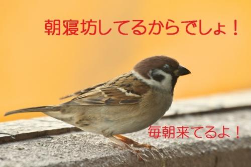 020_201512161853525fc.jpg