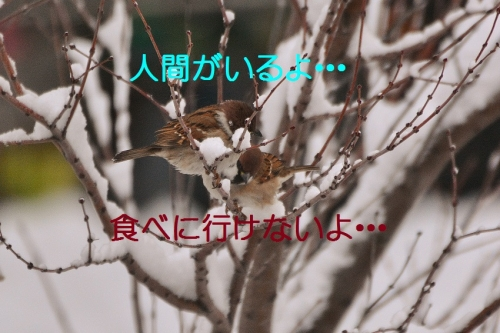 020_201601201930278c0.jpg