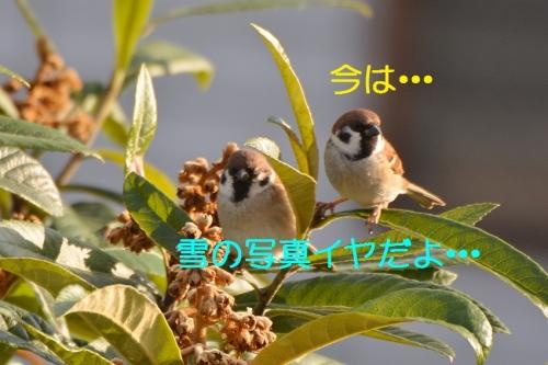 020_20160122184103da3.jpg