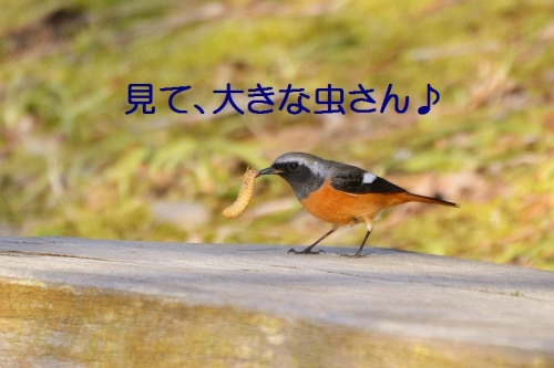 020_201602192038307dd.jpg