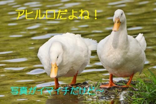 030_2015111620250050f.jpg