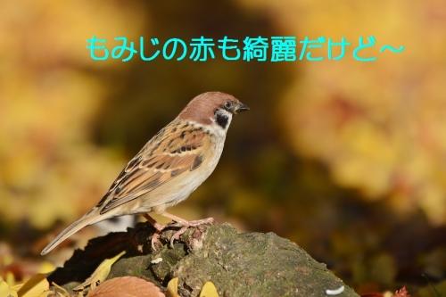 030_20151130213119835.jpg