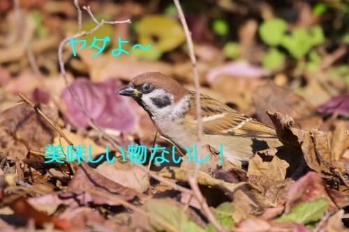030_2015120322294925c.jpg