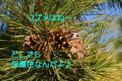030_20151205212516ae3.jpg