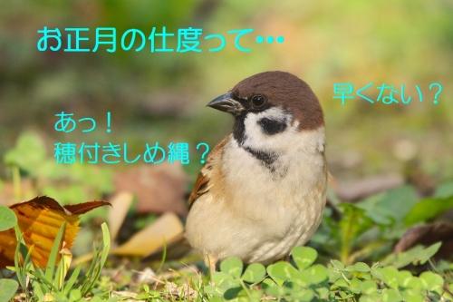 030_201512092221216b2.jpg