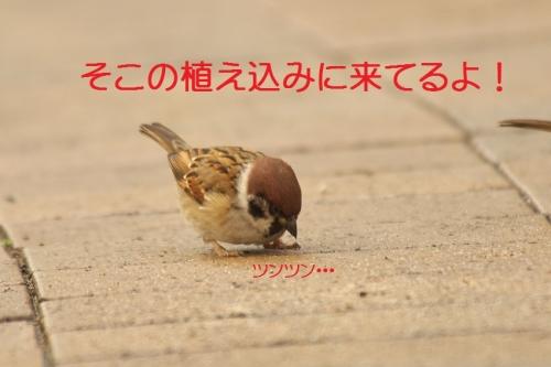 030_20151225190853319.jpg