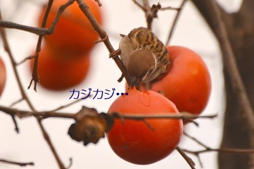 030_201512272135275f6.jpg