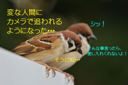 030_2015123021541437b.jpg