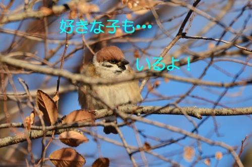 030_20160112184320fa7.jpg