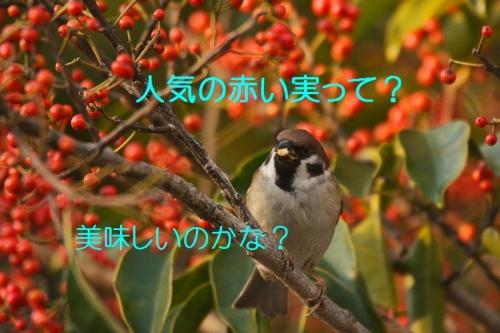 030_20160124224120782.jpg