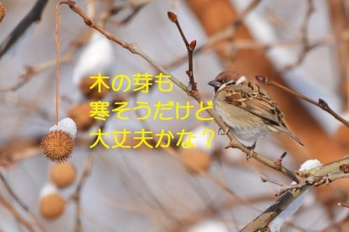 030_20160125212347ea8.jpg