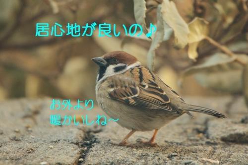 030_20160224220110009.jpg