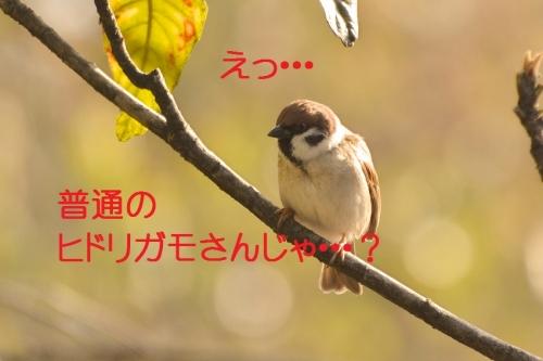 030_201603031911049d9.jpg