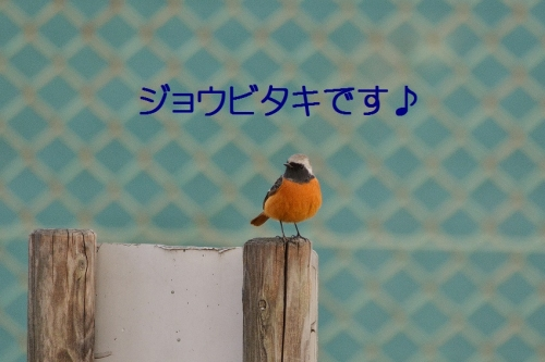 035_201601191717332f8.jpg