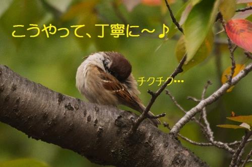 040_2015102718092744d.jpg