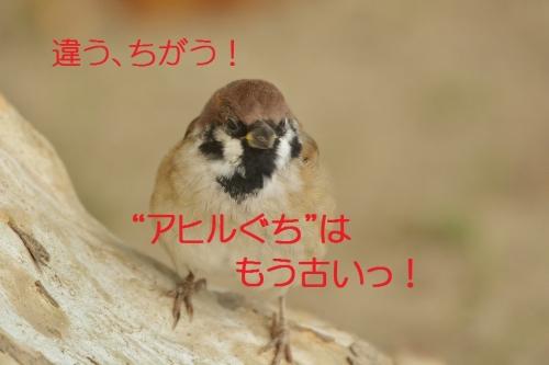040_2015111620250102e.jpg