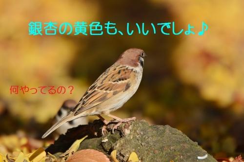 040_20151130213119d74.jpg