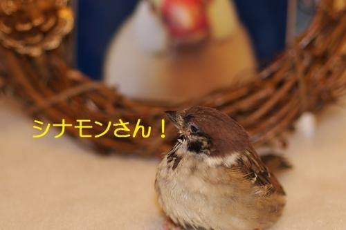 040_20151224213751e17.jpg