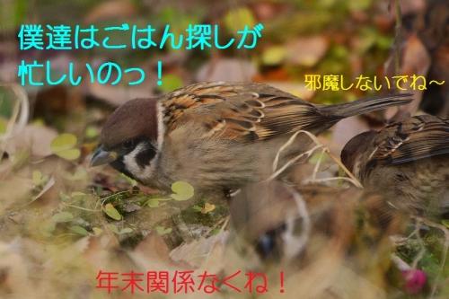 040_20151226230011ab7.jpg