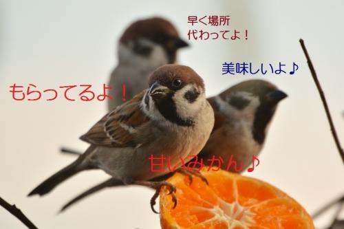 040_201601172132484eb.jpg