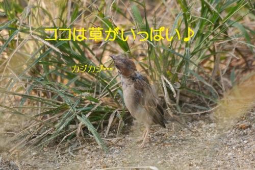 040_20160131210201efd.jpg