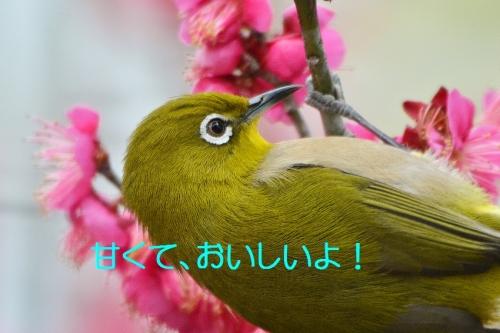 040_20160217184549069.jpg