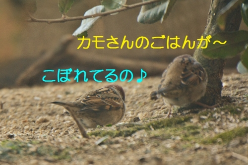 040_20160224220111b23.jpg