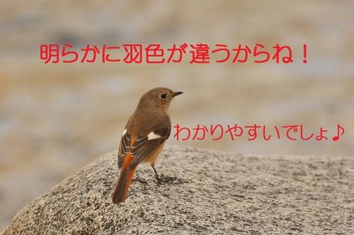 040_2016022801180175c.jpg