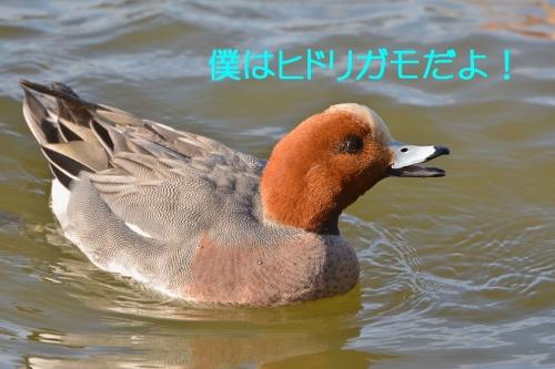 040_201603031911076fb.jpg