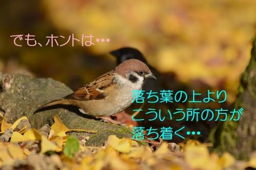 045_201511302131217bb.jpg