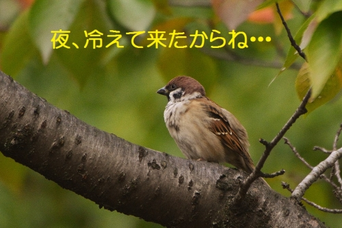 050_201510271809292bb.jpg
