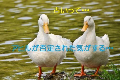 050_201511162025038db.jpg