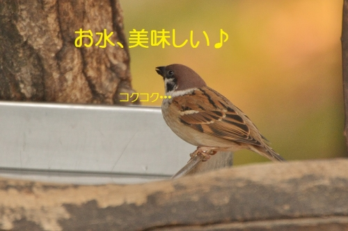 050_201512111803223dd.jpg