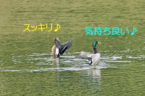 050_20151214212959034.jpg