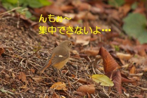 050_20151225190856b92.jpg